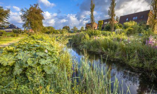 natuurinclusieve gebiedsontwikkeling versterkt biodiversiteit
