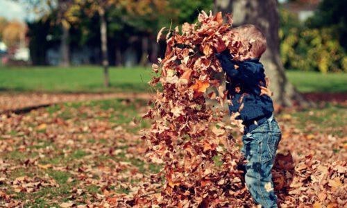https://pixabay.com/nl/photos/jongen-spelen-bladeren-herfst-kind-1209964/