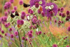 Alliums-butterflies-RGB-Small1-460x290