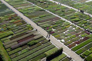 Lageschaar Vaste Planten Kwekerij - 460x290