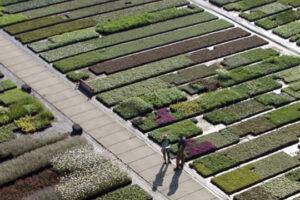 Lageschaar - Vaste planten .001