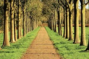 M. van den Oever - Laan- en parkbomen.001